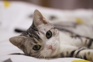 Why vaccinating your pets is important | Heathside Vet