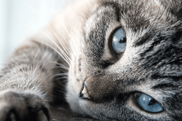 Cat Friendly - Heathside Veterinary Surgery