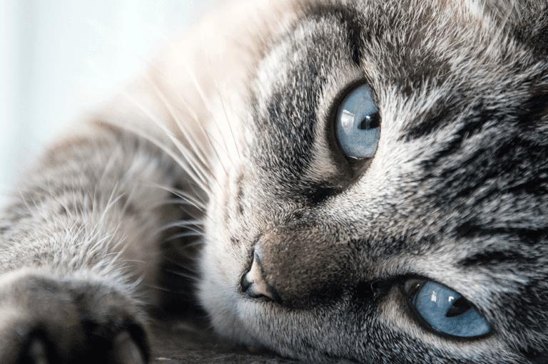 Cat Friendly - Heathside Veterinary Surgery