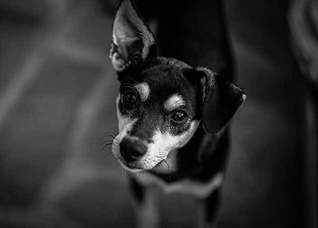 Helping pets cope with fireworks | Heathside Vet