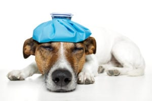 Pet insurance advice | Heathside Vet