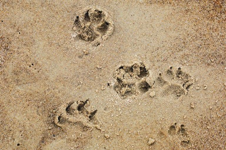 Keep your dog safe on the beach | Heathside Vet