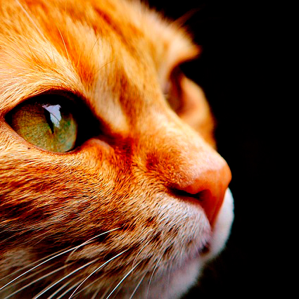 Pet Insurance - Heathside Veterinary Surgery